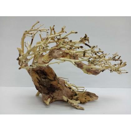 Bonsai Tree 23L x 11W x 18H cm