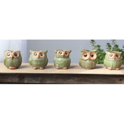 Owl Pot ,For Succulent Plant, Fittonia, Air Plant and Others