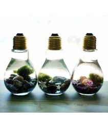 Light Bulb Shape Terrarium Glass Bowl