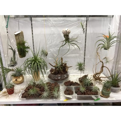 Angie Garden (Air Plant & Terrarium Product)